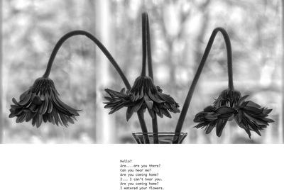 Black and white image of three gerbera daisy flowers dying in a vase. There is a poem written below it (described in text).