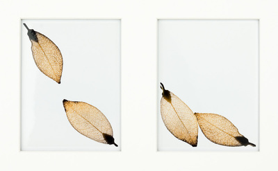 Two vertical pictures, each with gold-colored leaf-shaped earrings. The one on the left has a leaf in the upper left and lower right corners, with the ends pointing to the center; the one on the right has both leaves on the bottom of the frame, leaning against each other.