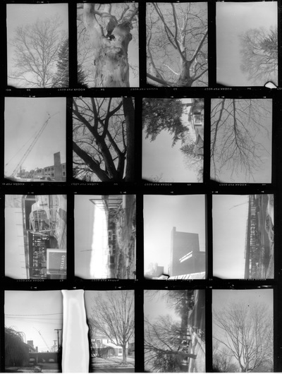 16 black and white pictures of trees on one sheet; there is a large white rectangle near the bottom.