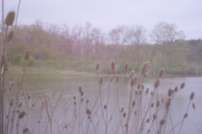 Fuzzy-focus oddly-colored landscape showing a pond and some teasel heads