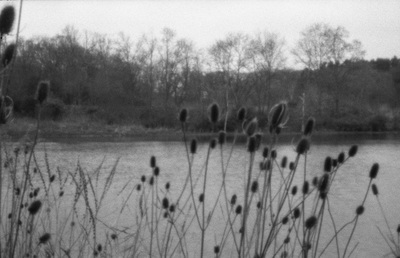 Black and white version of the pond image above with minor differences in angle of view and sharpness